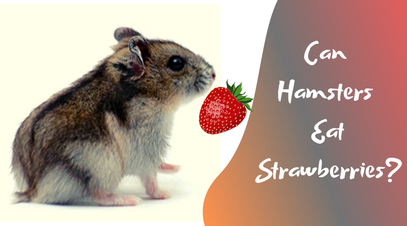 can hamsters eat strawberries