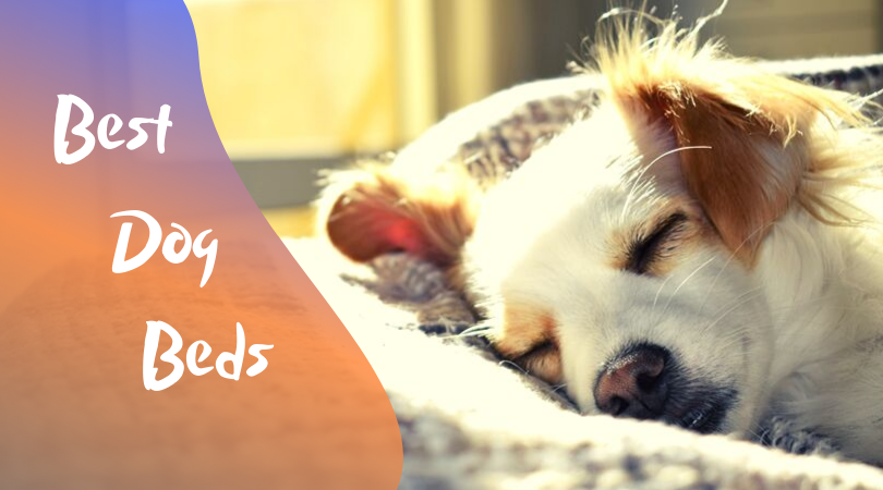 best dog beds with removable and washable cover