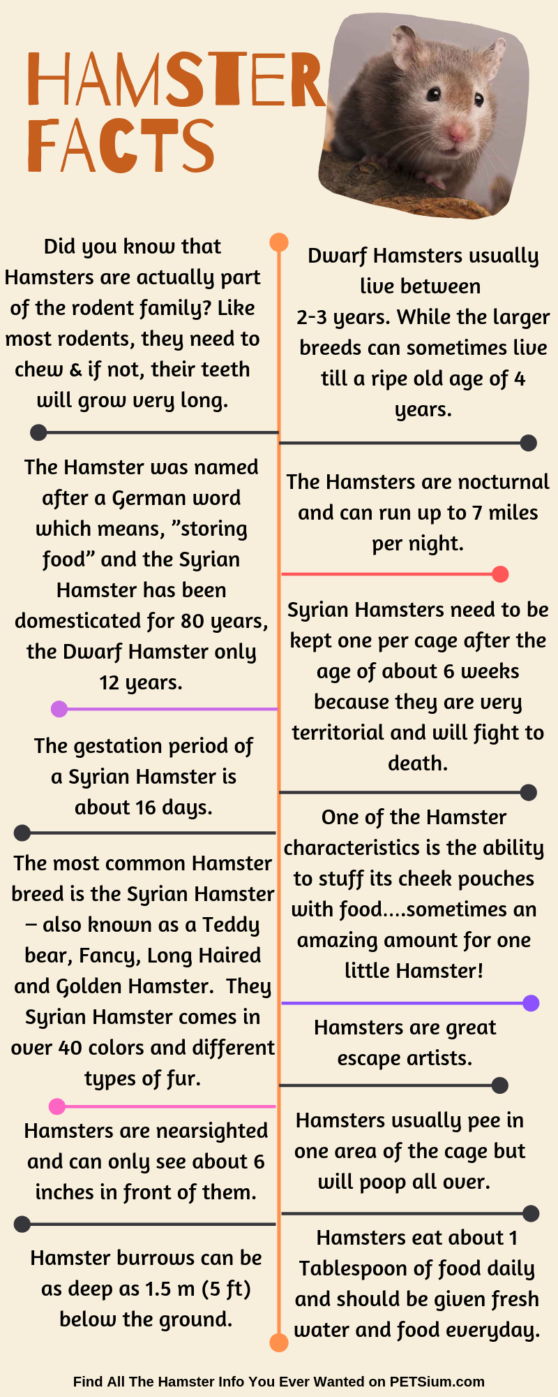 hamster facts infographic