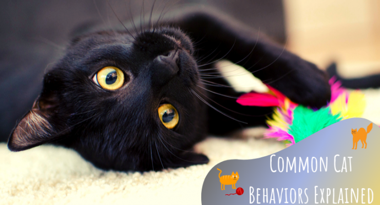 Common Cat Behaviors Explained