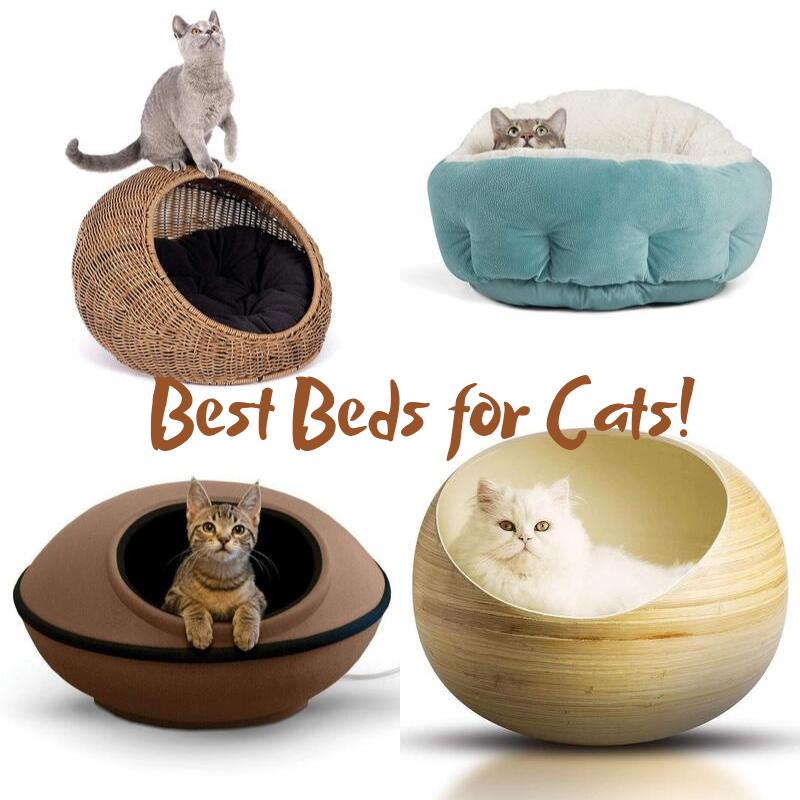 best beds for cats