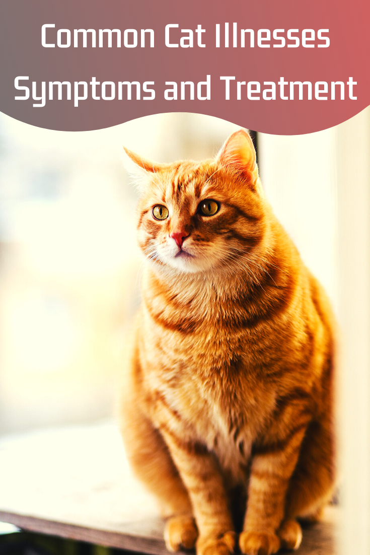 common cat illnesses symptoms and treatment
