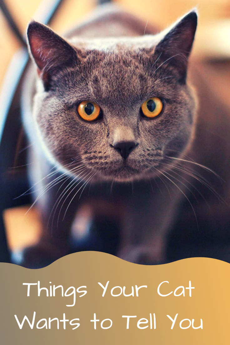 learn more about common cat behavior issues