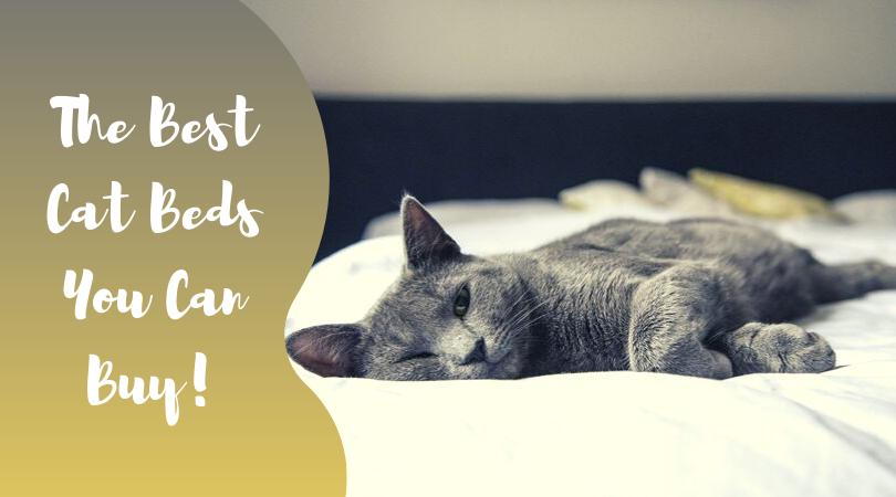 unique cats beds