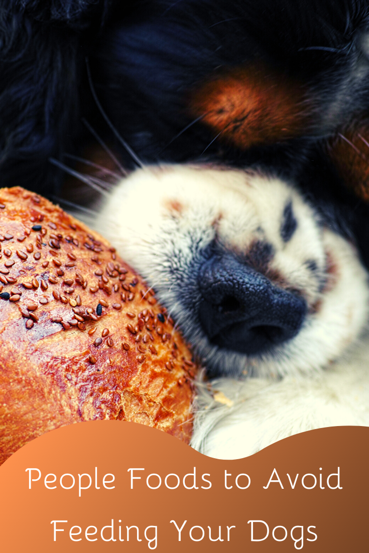 people foods to avoid feeding your dogs