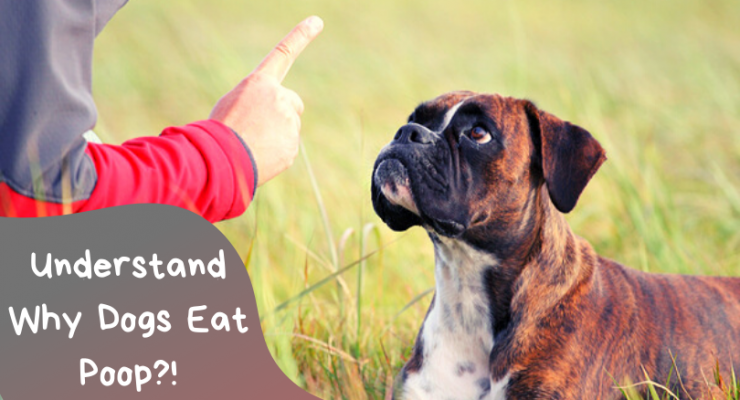 why dogs eat feces