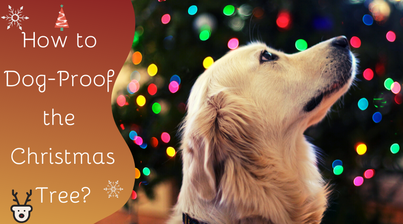 how to dog-proof the Christmas tree