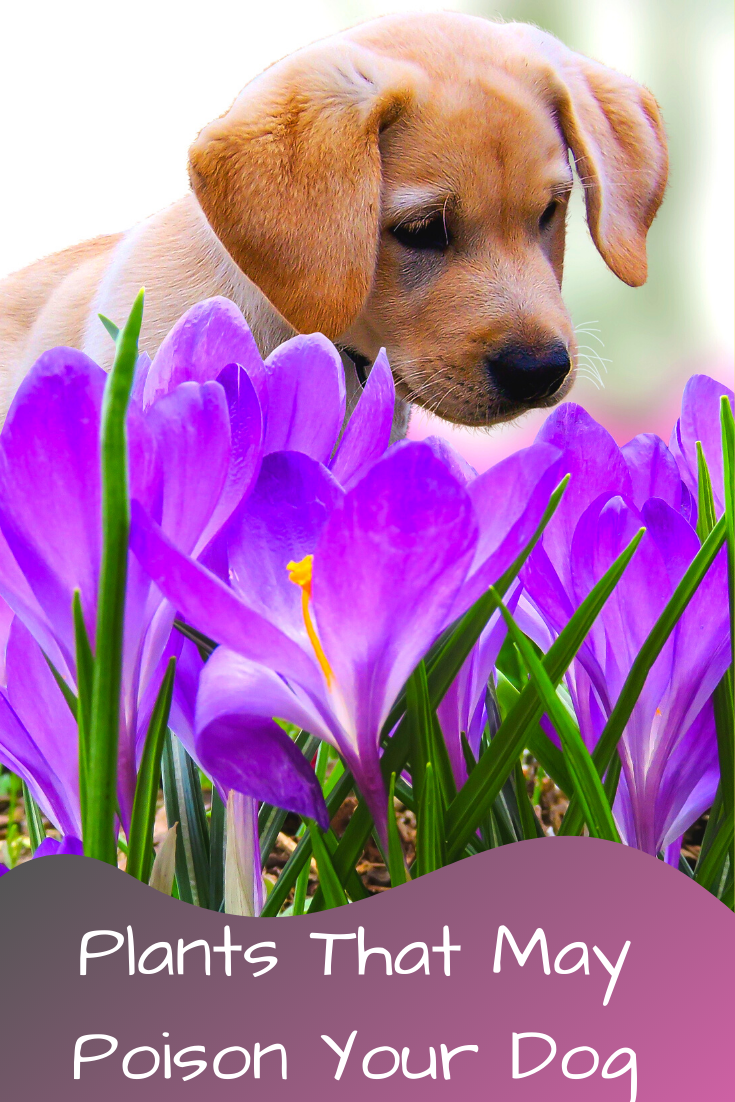 plants that may poison your dog