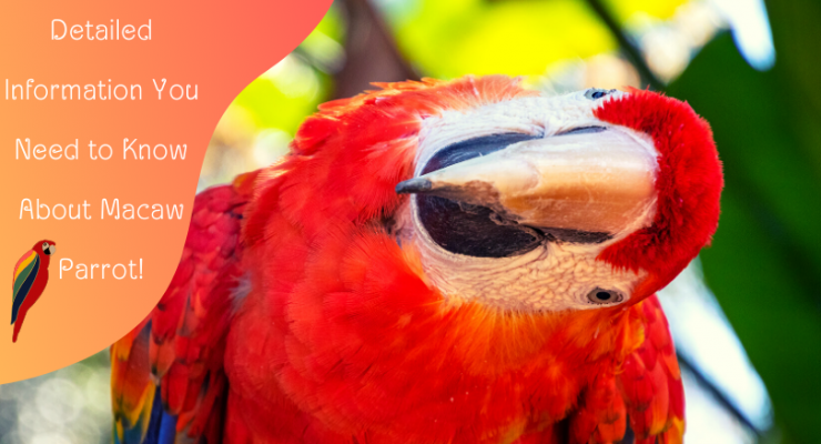 Detailed Information You Need to Know About Macaw Parrot