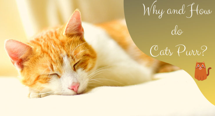 why and how do cats purr