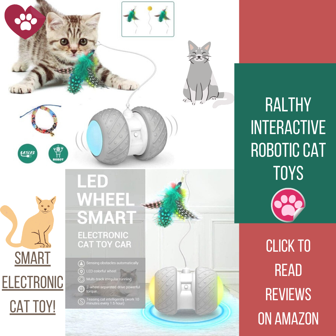 Interactive Robotic Cat Toys