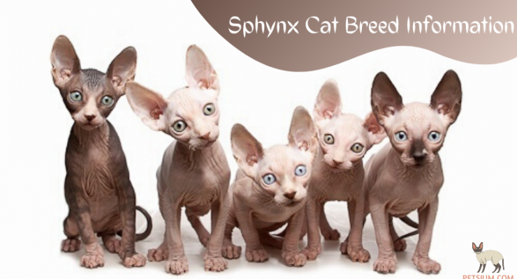 Cute Sphynx Cats