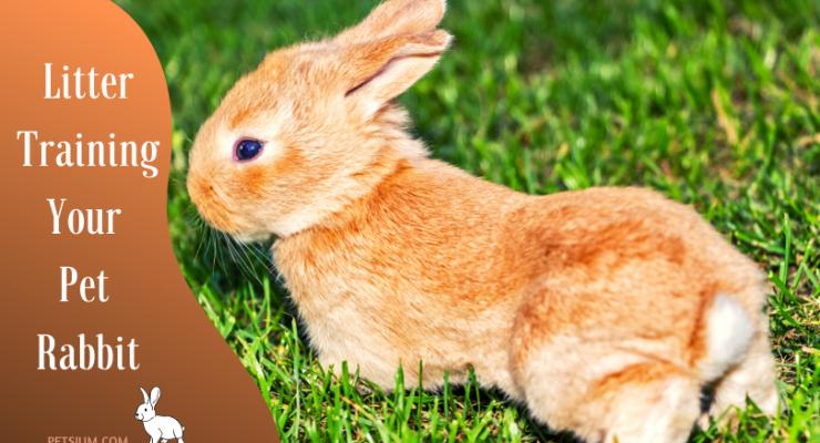 Litter Training Your Pet Rabbit
