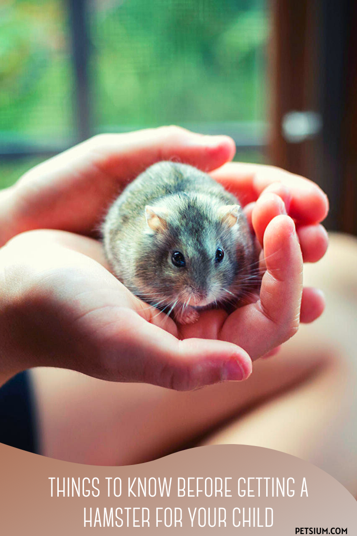 child holds a hamster in his hand