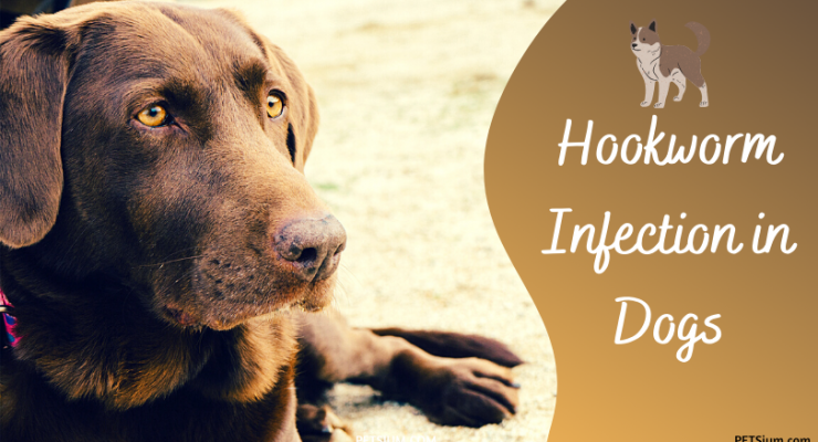 hookworm infection in dogs