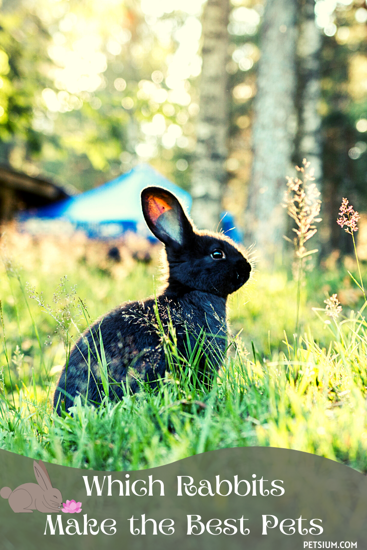 which rabbits make the best pets