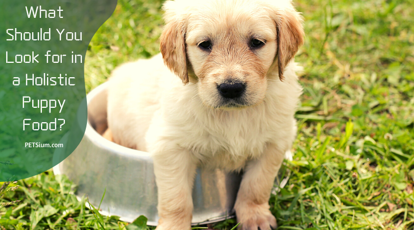 What Should You Look for in a Holistic Puppy Food