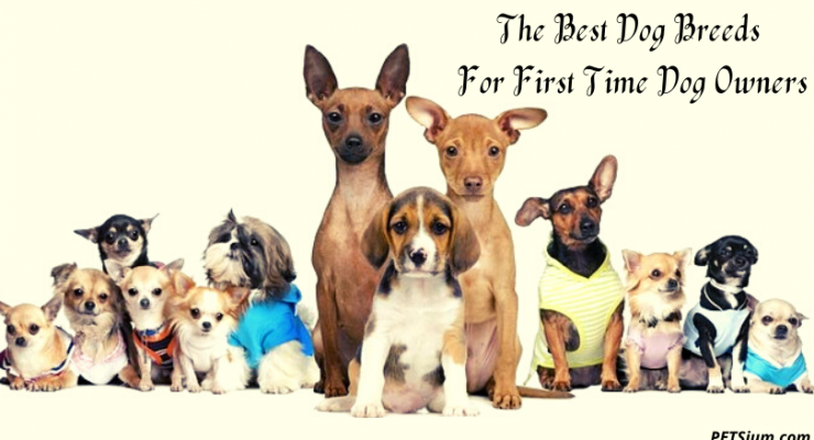 The Best Dog Breeds For First Time Dog Owners