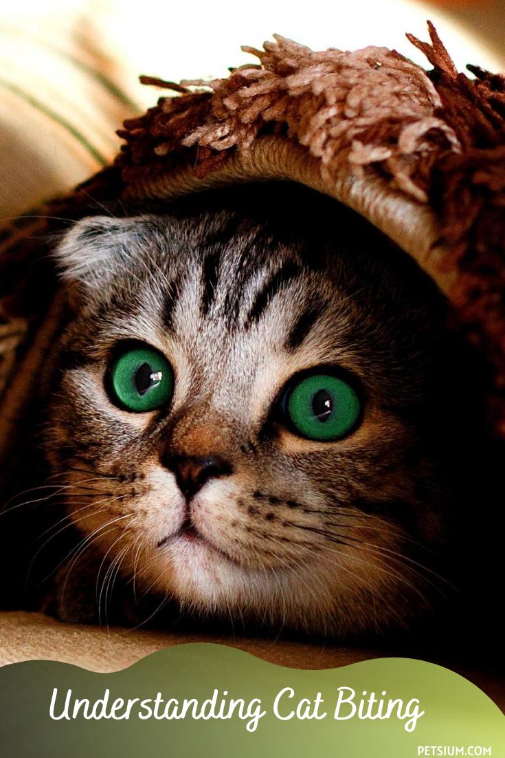 understanding biting behavior in cats