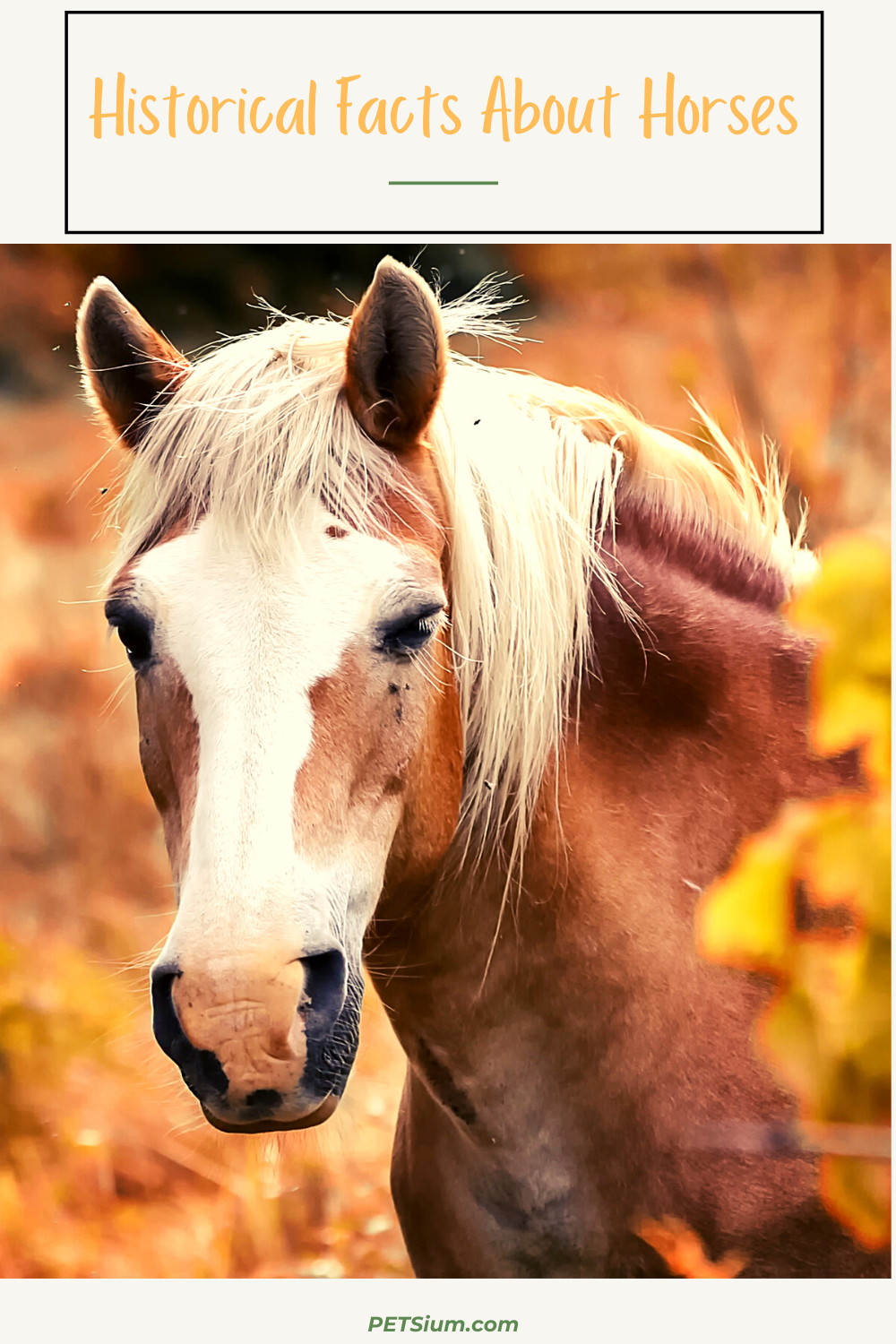 historical facts about the horses