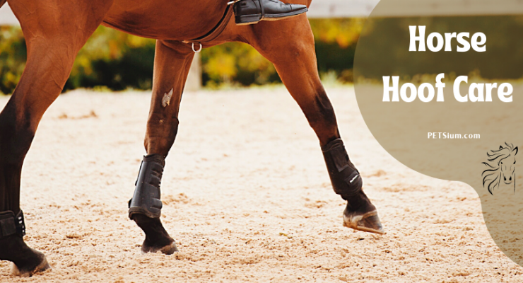 Basic Horse Hoof Care