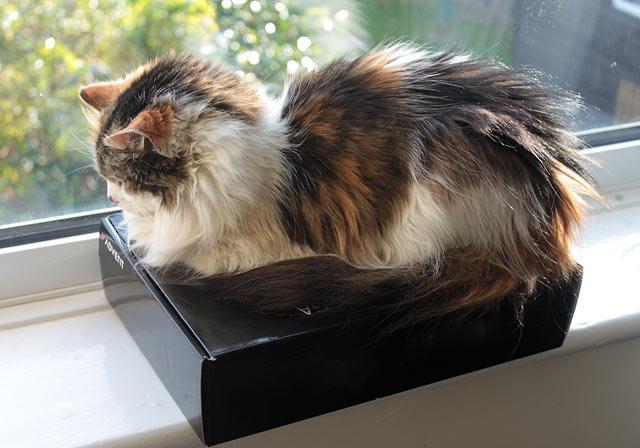 cat-on-window