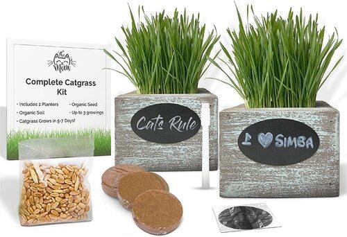 CALI KIWI PROS Organic Cat Grass Seeds Planters