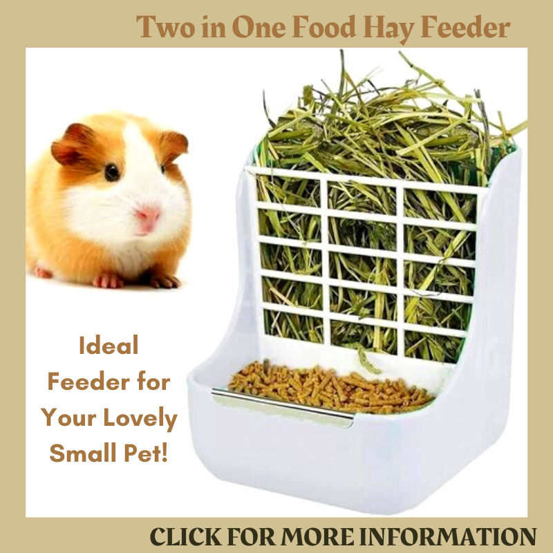 STKYGOOD 2 in 1 hay-food feeder for Guinea Pig