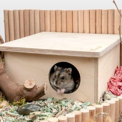 Hamster Chamber Hideout House