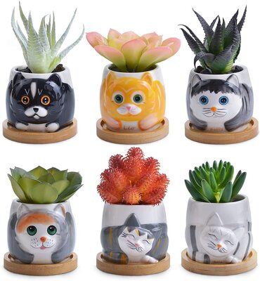 Keep On Planting 6pcs Cat Pattern Succulent Pots Ready to Gift Box for Cat Lovers