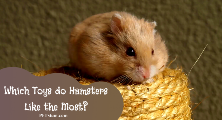 best toys for hamsters