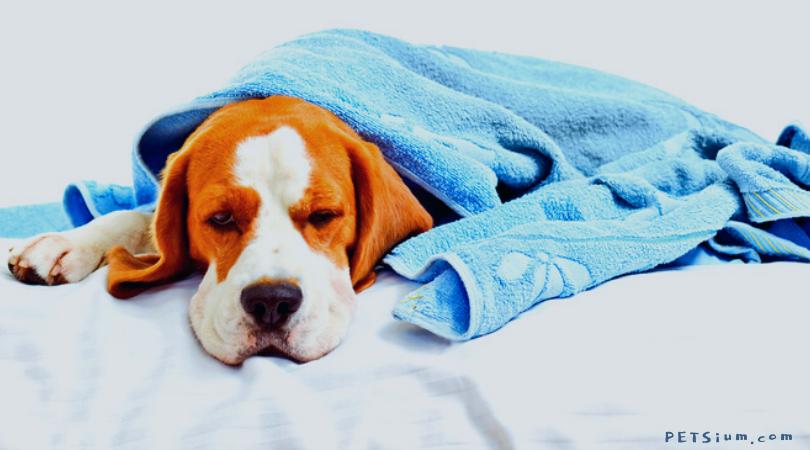 dog not feeling too well